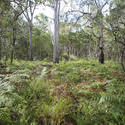 11874   Scenic view of thick forest and green fern