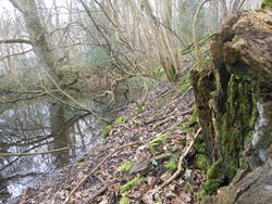 12594   woodland pond