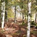 11877   Bright forest inn sunlight