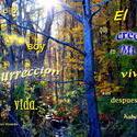 17510   La Resurreccion y la Vida