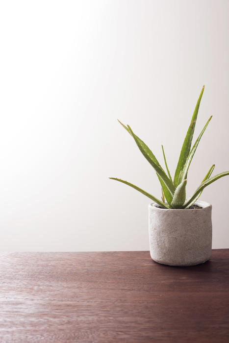 Green aloe vera plant in grey cylindrical pot on top of dark brown wooden table. Plain white wall in background.
