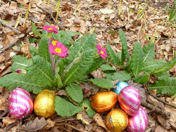 17350   collection of colorful foil chocolate Easter eggs