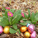 stock image 17350   collection of colorful foil chocolate Easter eggs