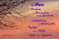 17319   El Amor es