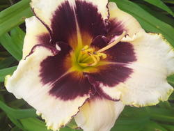 17556   Blooming