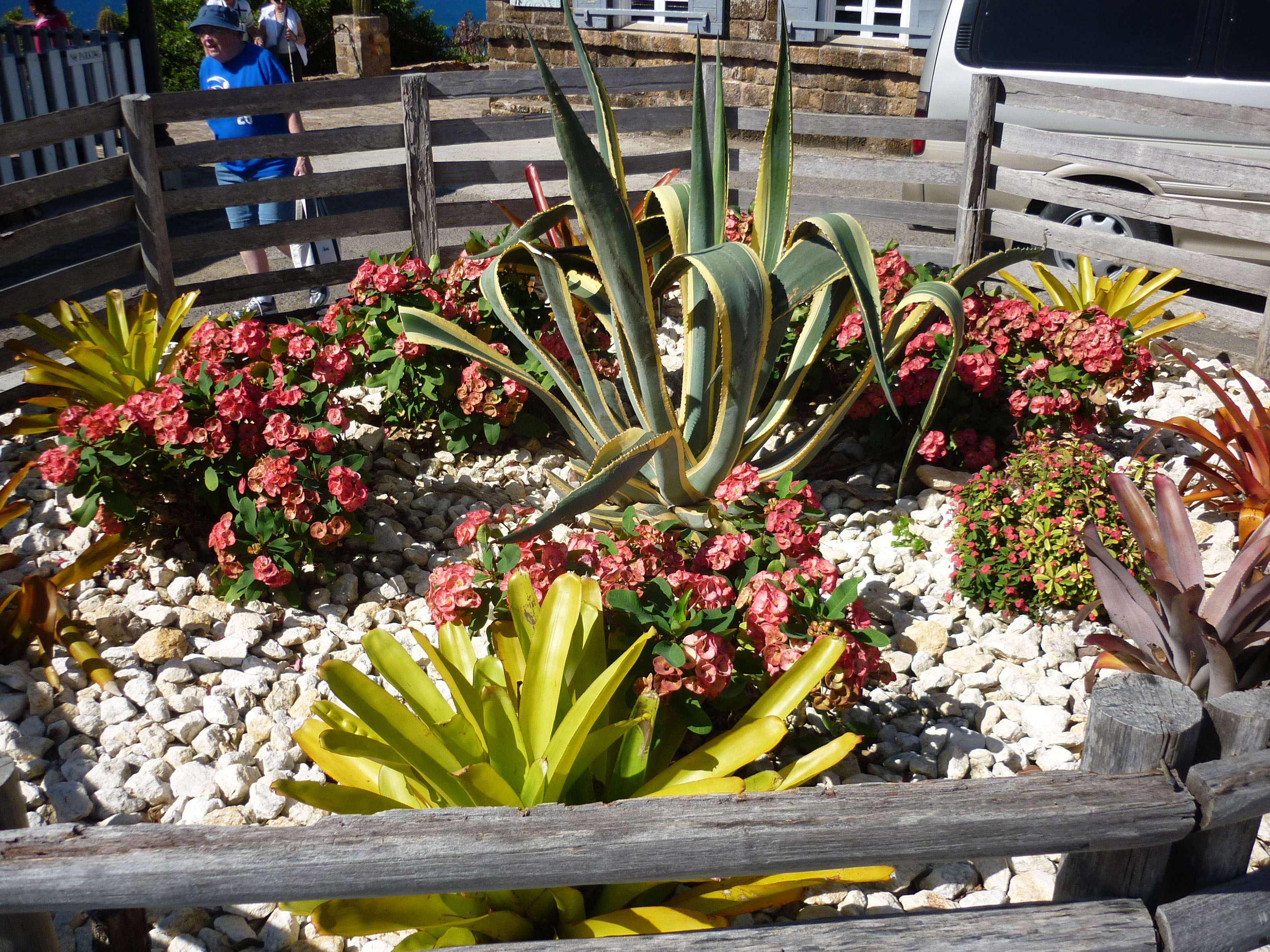 A Small Cactus Garden Stocked With A Variety Of Succulents