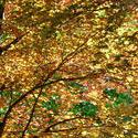 93-autumn_leaves3035.jpg