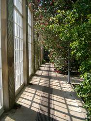 228-conservatory_sunlight_2536.JPG