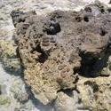 147-coral_rock_P6074.JPG