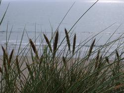 102-dune_grass_4467.JPG