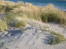 104-dune_grass_9239.JPG