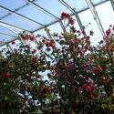 53-greenhouse_flowers_2530.JPG