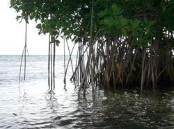 110-mangroves_5866.jpg