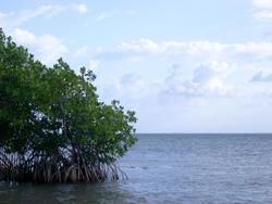111-mangroves_5869.jpg