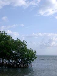 112-mangroves_5871.jpg