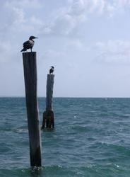 401-ocean_birds_5879.jpg