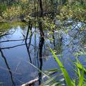 120-pond_plants4592.jpg