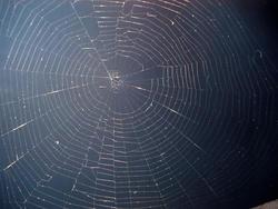 198-spider_web_4043.jpg
