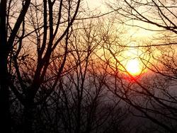 90-sunset_trees_2409.JPG