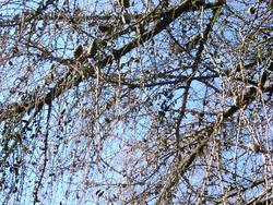 201-tree_branches2229.JPG