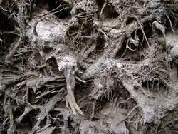 203-tree_roots_3055.JPG