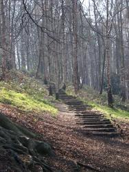 73-woodland_walk_2475.JPG