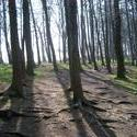 74-woodland_walk_2481.JPG