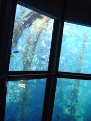 857-aquarium_02080.JPG