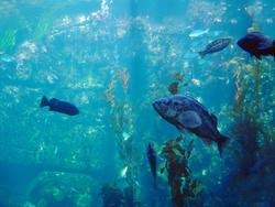 858-aquarium_02081.JPG