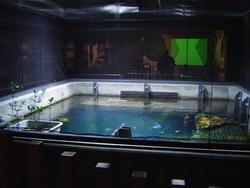 933-aquarium_02258.JPG