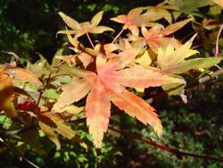 878-autumn_leaves_02193.JPG
