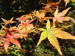 879-autumn_leaves_02194.JPG