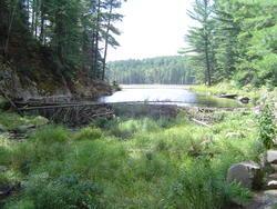 697-beaver_dam_algonquin_01047.jpg