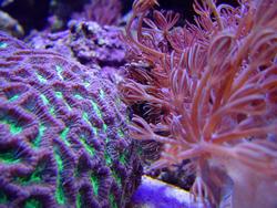 1188-brain_star_coral02457.JPG