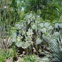 535-cactus_garden_114.jpg