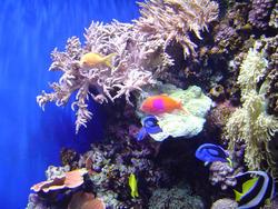865-coral_reef_02089.JPG