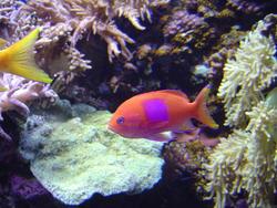 866-coral_reef_02090.JPG