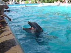 661-dolphin_159.jpg