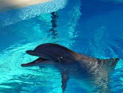 662-dolphin_water_10.jpg
