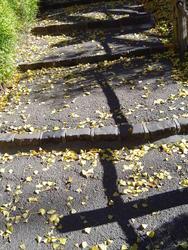 888-fallen_leaves_02195.JPG
