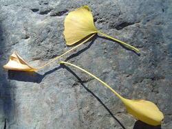 890-fallen_leaves_02203.JPG