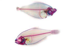 934-fish_skeleton_02249.JPG