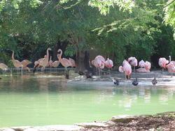 663-pink flamingos