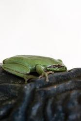 1132-green_frog_1628.jpg