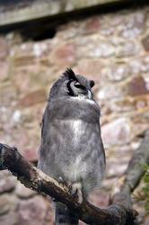 828-eagle owl