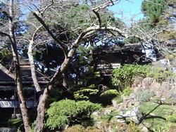 991-japanese_tea_gardens02180.JPG