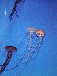 868-jelly_fish_02065.JPG
