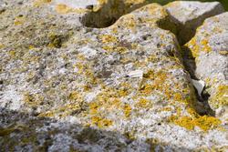 1112-lichen_rock_1898.jpg