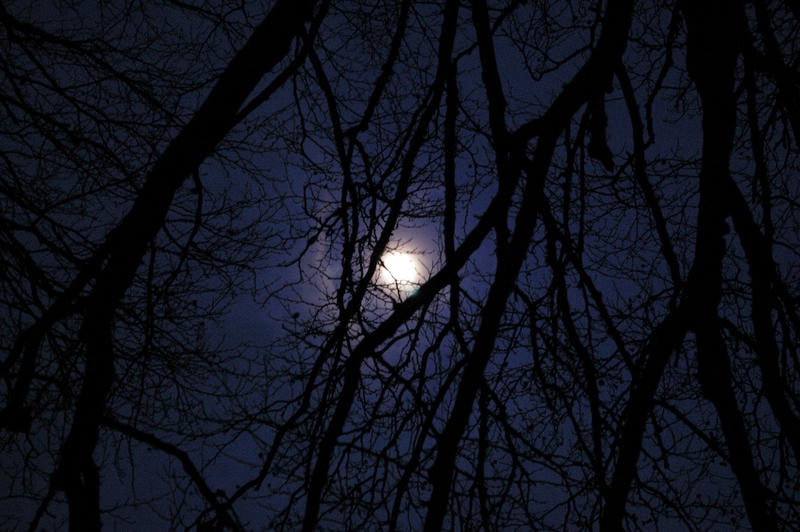 nocturnal, moon night throught the trees