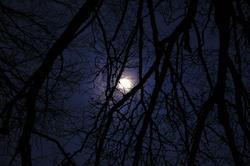 833-moon light